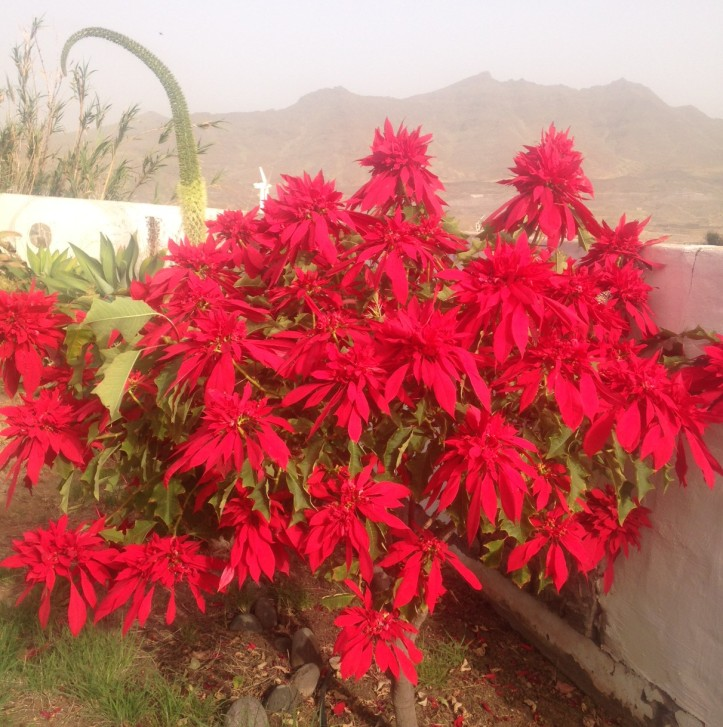 Blumenparadies Gran Canaria
