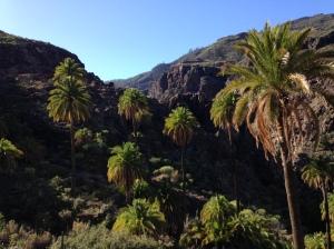 Canyon mit Palmen