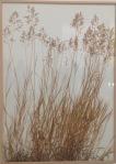Herman de Vries: Gräser aus der Lagune von Venedig
