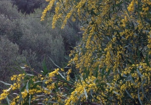 Wandern auf Mallorca: Wenn der Wiedehopf Wiedehopf