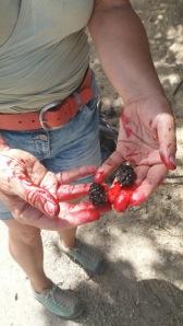 Maulbeeren wachsen dir quasi in den Mund