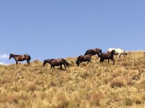 Pferde gehören zum Leben in den Alpujarras