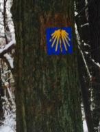 Auch in fränkischen Wäldern finden sich Jakobsweg-Zeichen