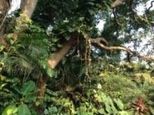 Der grüne Wahnsinn in Goa